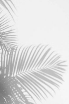 Gray Aesthetic, Black And White Aesthetic, Aesthetic Photo, Aesthetic Pictures, White Background Wallpaper, Pastel Background Wallpapers, Aesthetic Backgrounds, Aesthetic Iphone Wallpaper, Aesthetic Wallpapers