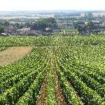 Burgundy Discovery