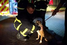 According to Friday's BBC News, a 15-year-old boy has been arrested on suspicion of arson for a devastating fire that has killed dozens of dogs at a kennel for homeless dogs in Manchester, United King