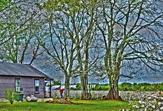 Farm Print featuring the photograph Life On A Cotton Farm by Bill Hayes
