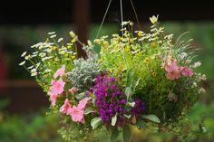 まるで道端に咲く野花のような、ナチュラル感ただよう寄せ植え。