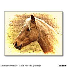 Golden Brown Horse in Sun Postcard