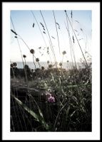 Wildflowers Juliste
