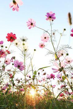 Maak van je tuin een levende tuin! | voordemakers.be