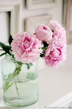 peonies and petals Peony Flower, Cactus Flower, My Flower, Peony Plant, Shabby Flowers, Fresh Flowers, Beautiful Flowers, Exotic Flowers, Pink Peonies