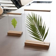 Floating frames 'between' to create your own composition - Diy Decoration House Plants Decor, Plant Decor, Decoration Plante, Floating Frame, Floating Picture Frames, Leaf Art, Resin Crafts, Dried Flowers, Paper Flowers