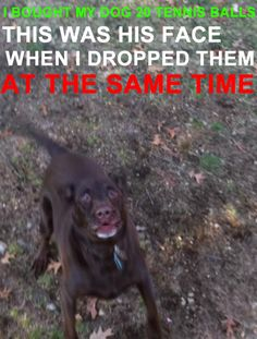Dog's reaction is priceless