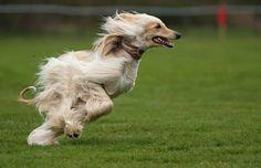 Animales fotografiados en el momento exacto | Animales/Naturaleza, Fotografía, en Gran Angular Blog