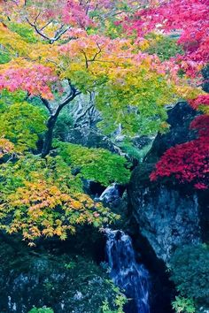 Natural Beauty, God gave us all the colors of the rainbow in nature yet we only allow about three or four Beautiful World, Beautiful Gardens, Beautiful Places, Beautiful Pictures, Yamagata, Dame Nature, Les Religions, Valley Of Fire, Colorful Trees
