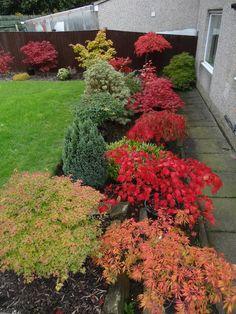 Garden Plants, Garden Landscaping, Gardening, Landscape, Flowers, Outdoor, Beautiful, Ideas, Garden