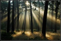 As always, the morning-light show lasted only on short time on this beautiful morning in the forest near Laage Vuursche/The Netherlands. When the sun ha. The morning-light show Photography Words, Light Photography, Landscape Photography, Inspiring Photography, Light Of The World, Light Of Life, Light Rays, Relaxing Music, Morning Light