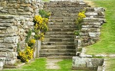 Sweetbriar Dreams: Wordless Wednesday - Steps to Where?