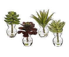 Set de 4 plantas suculentas con jarrón de vidrio