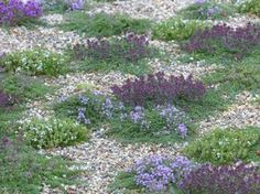 Types Of Urban Gardening - Urban Gardening Gravel Garden, Potager Garden, Garden Plants, Landscape Design, Garden Design, Drought Tolerant Landscape, Ground Cover Plants, Edible Garden, Garden Projects
