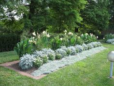 White flower border by Missouri Botanical Garden, via Flickr