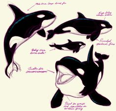 Orca Study by can find Killer whales and more on our website.Orca Study by Orca Tattoo, Whale Tattoos, Killer Whale Tattoo, Killer Whales, Orcas, Animal Sketches, Animal Drawings, Orca Art, Whale Drawing