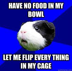 Jumpy Guinea Pig memes | quickmeme