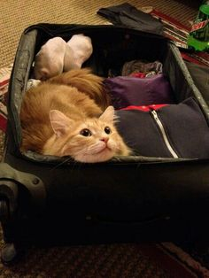 Cat Like Your Luggage? Mew Fad. Insert a pad on bottom of Suitcase, To keep the lid open, U can Hot Glue a piece of Materiel to the bac of the Lid & bottom of the case, U can also decorate the inside of the lid with padding or Materiel, Happy Catting!
