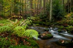 Photo Nature, Flowing water Flow, Waterfall, Nature, Photography, Outdoor, Outdoors, Naturaleza, Photograph, Fotografie