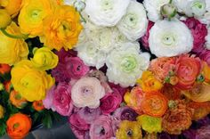 http://niceflowermarts.mywapblog.com/  Go Here For Sf Flower Mart  Flower Delivery San Francisco,Sf Flower Mart,San Francisco Flower Delivery,Flower Mart Sf,Florists San Francisco