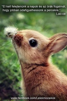 46 That Are Cuter Than The Average Pet Puppies and kittens aren't the only cute animals in nature. Why would humans find baby animals cute to look at, Baby Animals Super Cute, Cute Baby Bunnies, Cute Little Animals, Cute Funny Animals, Cute Dogs, Tiny Bunny, Baby Animals Pictures, Cute Animal Pictures, Animals And Pets
