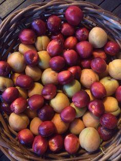 Úroda Plum, Fruit, Food, Meal, Essen