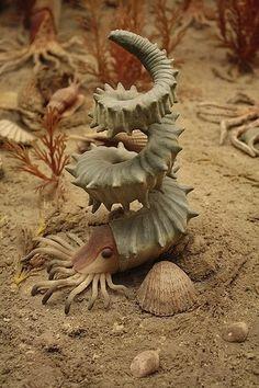 Helioceras heteromorph ammonite       http://www.facebook.com/photo.php?fbid=383971231685575=a.119791638103537.28779.117905868292114=1_count=1=n Ammonite, Makeup Trends, Garden Sculpture