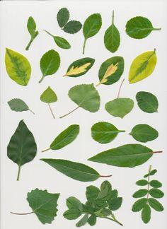 Leaf Pack – 81 Resources – Vectors + Images