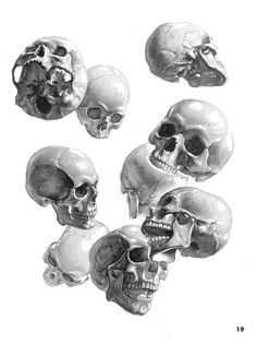 As an artist - especially a portrait artist - you have to become very familiar with the human skull. It is the foundation of the face. If you are ever going to accurately capture someone's likeness, you need to understand what lies beneath their skin. This also applies to figure drawing.  We as artists must understand the human skelton as a whole.  - Aljulew