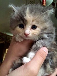 Cute!!Baby Cats and Kittens meowing playing video Compilation baby Cats Kittens doing funny things More cute kittens HERE #kittens #cats #CuteKittens #catsandkittens