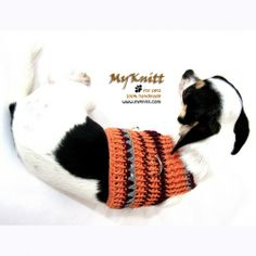 Handmade crochet cute dog vest harness by myknitt . Check all our collection at www.myknitt.com fashion dog designer clothes. All can be customized at affordable price. #chihuahua #handmade #myknitt #crochet #diy