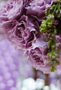 Lavender Roses ~ Le Baccarat Fiori e Regali