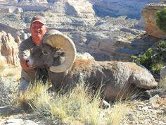 Desert Bighorn Sheep - Southern Utah - findmeahunt.com - Big Game Hunting - Hunting Trips