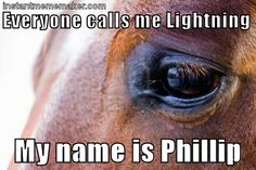 First World Horse Problems, a collection of memes | Horse Nation