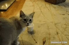 Oooh, what's in the cup, I... no, no, no, NO, NO, NO, NO, NO!!!
