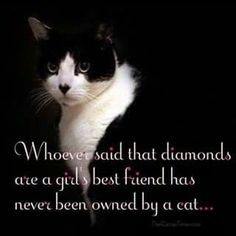 ...if you are ever lucky enough to be loved by a cat cherish that blessing.