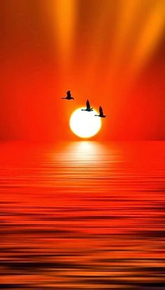 ☼ Flying in the red sunset Beautiful Nature Wallpaper, Beautiful Moon, Beautiful Sunrise, Beautiful Landscapes, Beautiful Places, Beautiful Pictures, Amazing Sunsets, Amazing Nature, Sunset Pictures