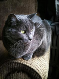 This is what Smokie looked like. He was Bailey's best friend. We will all miss him.
