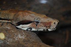 Snake eyes by fluffylink