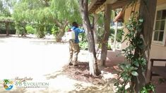 Gardener Santa Barbara Taking Care the damage on the plants Gardening Services, Neem Oil, Landscaping Company, Garden Care, Santa Barbara, Lawn And Garden, Evolution, Landscape, Plants