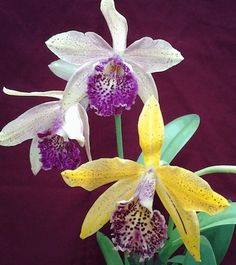77 Best my orchids images in 2019   Orchids, Plants, Garden