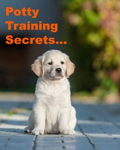Want to learn a few puppy potty training secrets? Learn these and many other dog training secrets using these hands-off methods. Click here to read more  www.dog-names-and-more.com/hands-off-dog-training.html