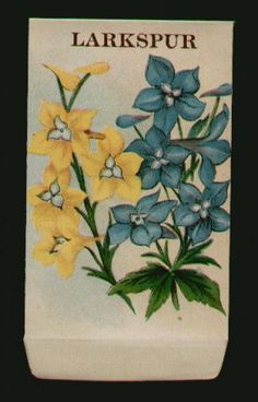 Stock, LARKSPUR, Antique Seed Packet, 2