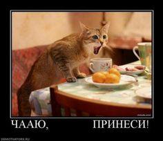 Демотиваторы про животны… Wtf Funny, Funny Cats, Funny Animals, Cute Animals, Funny Memes, Jokes, Animal Pictures, Funny Pictures, Russian Humor