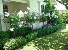 Standard roses with low under planted hedge. Willowbrook Park: Eden: The changes over the years...