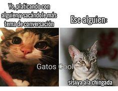 "164 Me gusta, 0 comentarios - Gatos Cool (@gatoscooloficial) en Instagram: ""😿 . . . . . #memesdegatoscool #gatoscool😸 #gatos_cool #triste #tristeza #conversaciones…"""