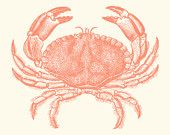 Coral Pink Baltimore Steamed Crab Art Print 8 x 10-Etsy