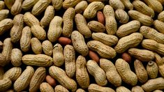 The first treatment to help prevent serious allergic reactions to peanuts may be on the way.