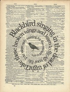 Blackbird singing in the dead of night. Take these broken wings and learn to fly. All you life, you were only waiting for this moment to arrive. ~The Beatles music quote Book Page Art, Up Book, Book Pages, Book Art, Les Beatles, Beatles Art, Beatles Songs, Beatles Poster, Typo Poster
