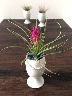 DIY Easter Egg Air Plant Centerpieces >> http://blog.diynetwork.com/maderemade/how-to/easter-egg-diy-air-plant-centerpieces/?soc=pinterest